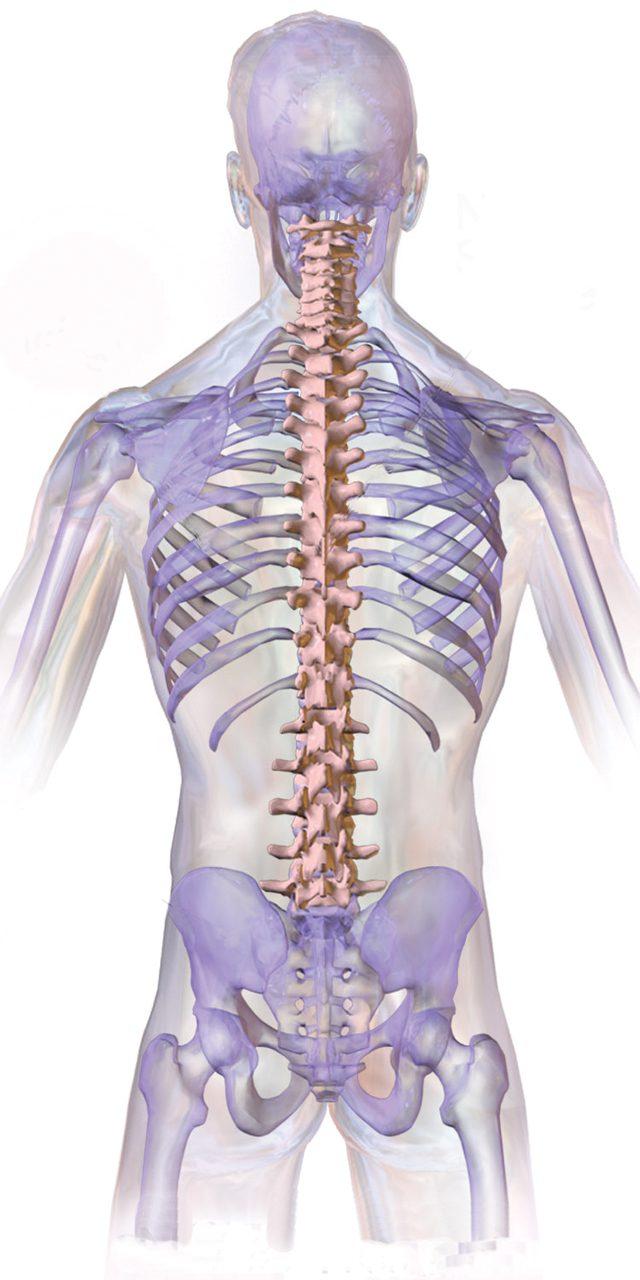 Normal_Spine